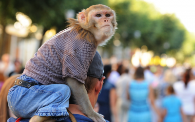 Is that a Monkey on your Back?